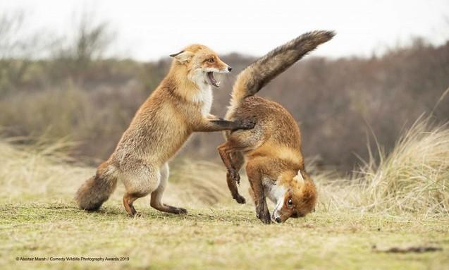 Всесвітній конкурс дотепних фото дикої фауни визначив фіналістів 2019 року 1/1
