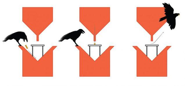 Голландський стартап Crowbar навчить ворон обмінювати недопалки на їжу 1/1