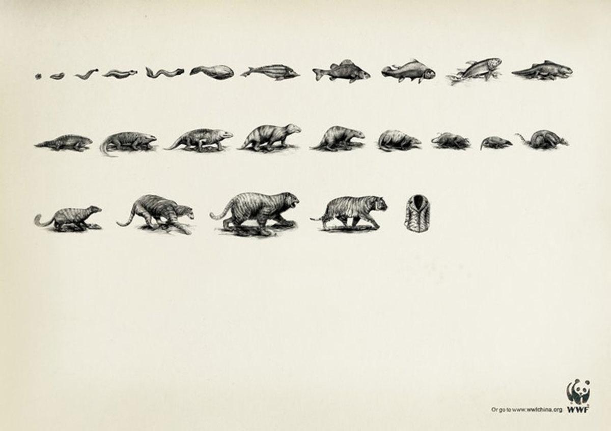 evolution of animals - 880×622