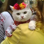 Ukrainian embroidered costume for cat (photo)