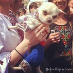Ukrainian embroidered costume for pet (photo)