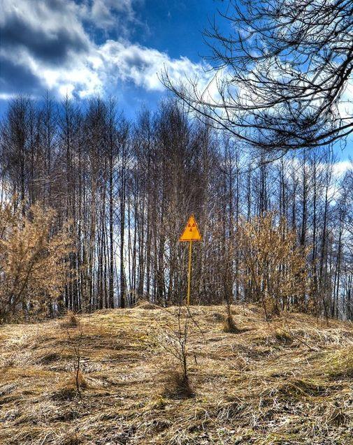 Рудий ліс