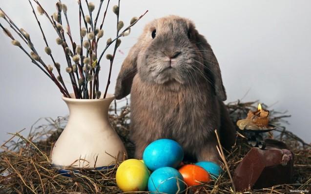 Великодній кролик Великдень писанка фото