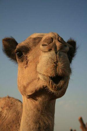 Чому варто побувати в Єгипті бодай раз
