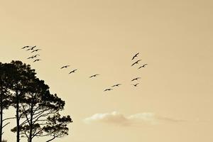 Vyacheslav Huk. Birds