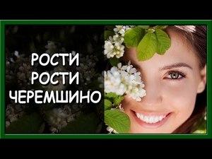 Українські патріотичні пісні. Рости, рости, Черемшино