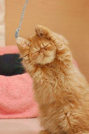 Умиті та ображені: коти, які прийняли ванну