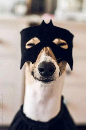 Собаки: які породи найкраще адаптуються у квартирі