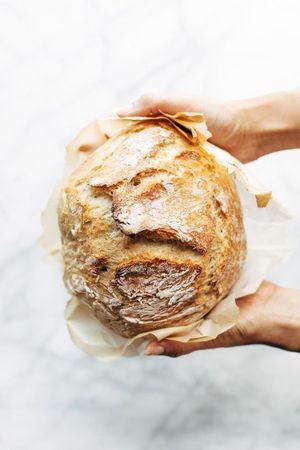Як виникло хліборобство
