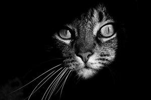 Таємниче життя котів