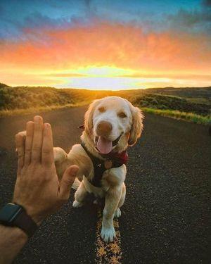 Кілька аргументів на доказ того, що собаки — члени сім'ї