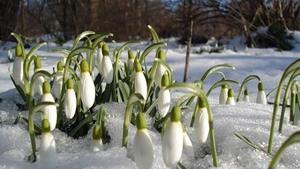 А за вікном майже весна...