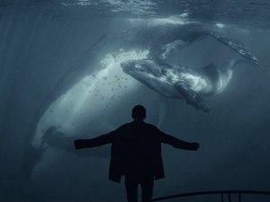 Синій кит: неочікуваність чи необхідна реакція?