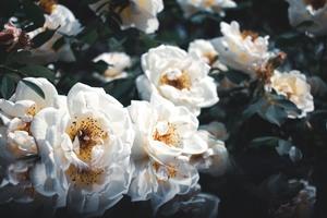 Фотогалерея квіткового світу
