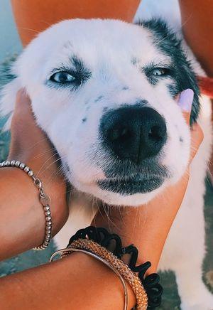 Дружба довжиною в життя: собаки