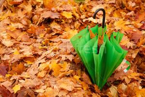 Зелена парасолька (осінньо-терапевтичне)