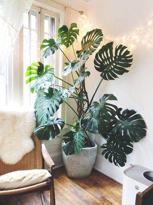 15 отруйних рослин, які швидше за все є у вашому домі