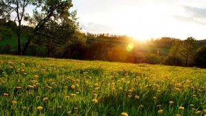 Знову трави ростуть навесні