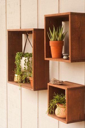 Ароматні кімнатні рослини, які подарують гарний настрій вдома