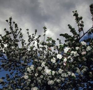 (присвячено весняній Грозі)