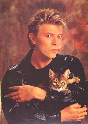 Коти та знаменитості, або Хто із зірок не встояв перед пухнастими