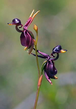 Квіти, які нагадують нам дещо інше