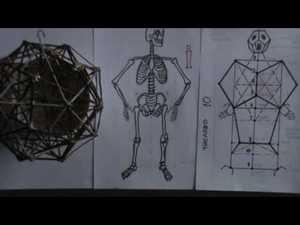 сакральний скелет людини
