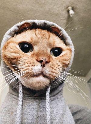 15 котів, які хочуть усю вашу увагу