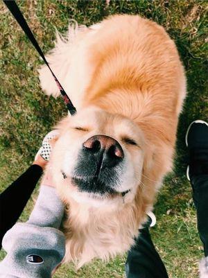 Велика любов до великих собак (фото)