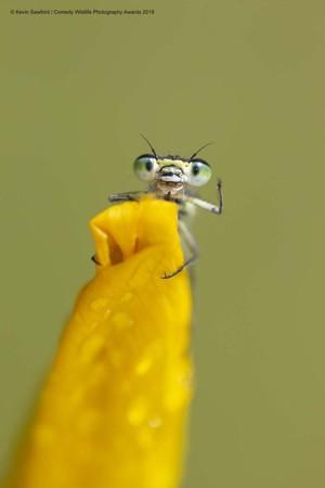 Всесвітній конкурс дотепних фото дикої фауни визначив фіналістів 2019 року: підбірка