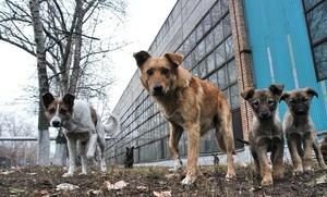 Українські пси-безхатченки: бути чи не бути?