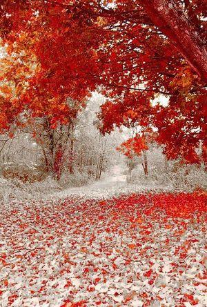 Коли зима обіймає осінь (фото)