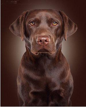Чому собаки відчувають поганих людей?