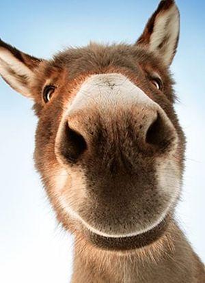 Неймовірні фото тварин, які вміють посміхатися