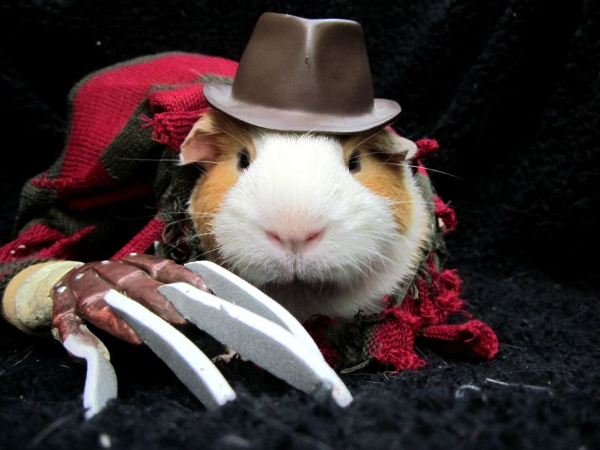 Events, Global Trade Shows, All Conferences, Upcoming Funny animal halloween pictures