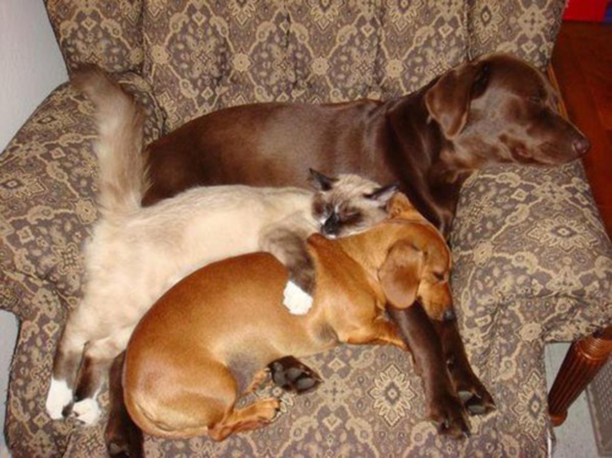 Собака во сне – это всегда кто-то, кто находится рядом, близко.